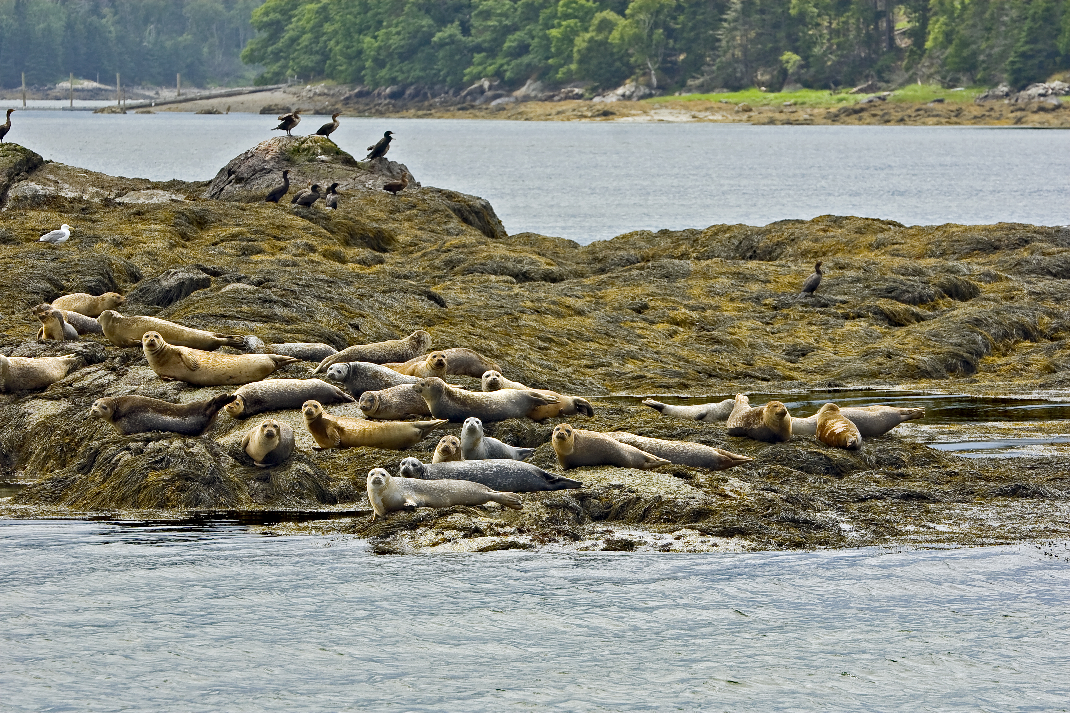 The seals on the beach